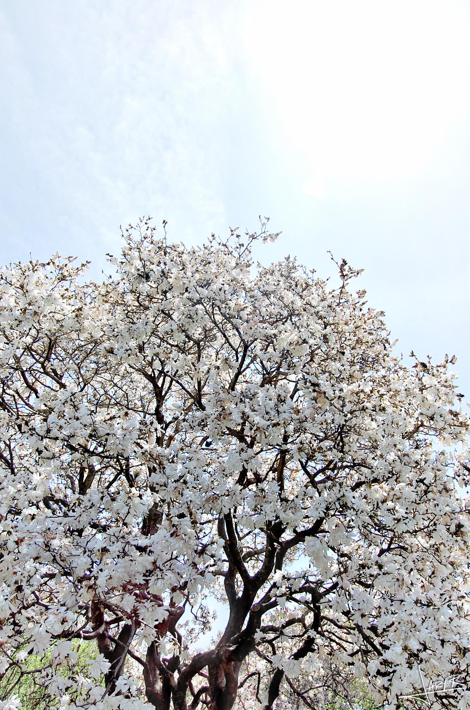 UWArboretum_Spring_1