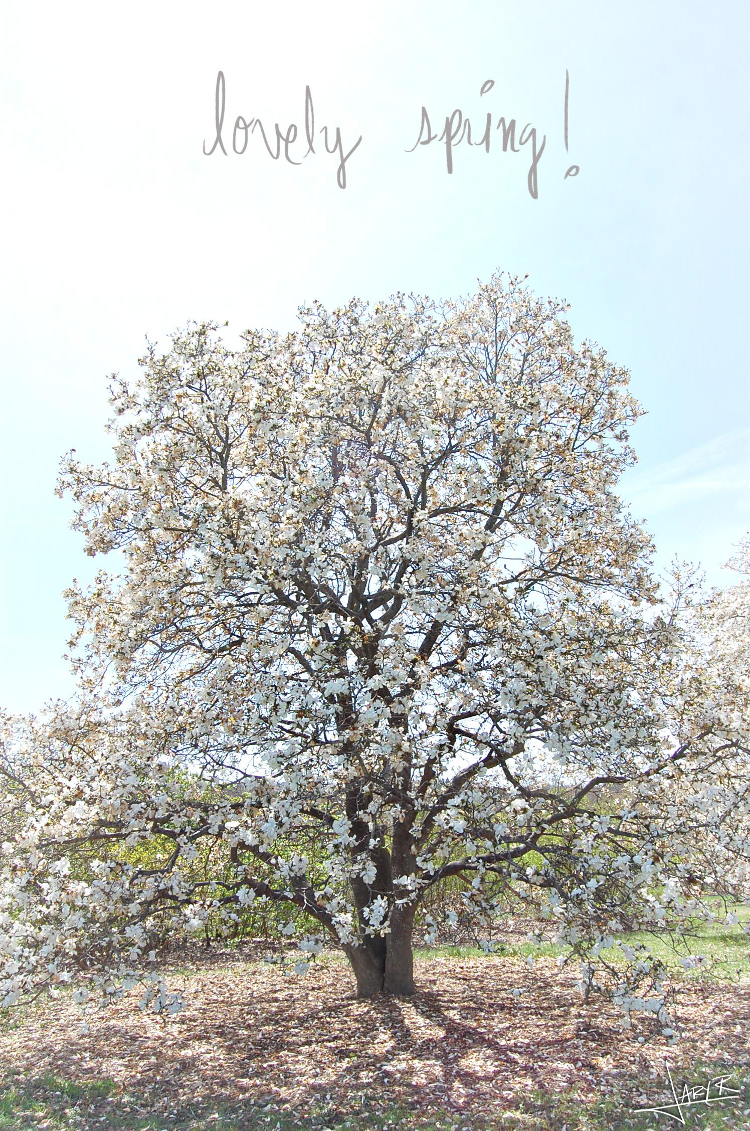 UWArboretum_Spring_12