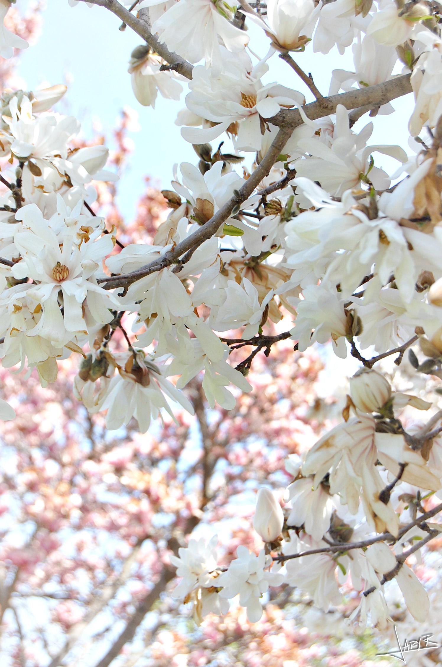 UWArboretum_Spring_2