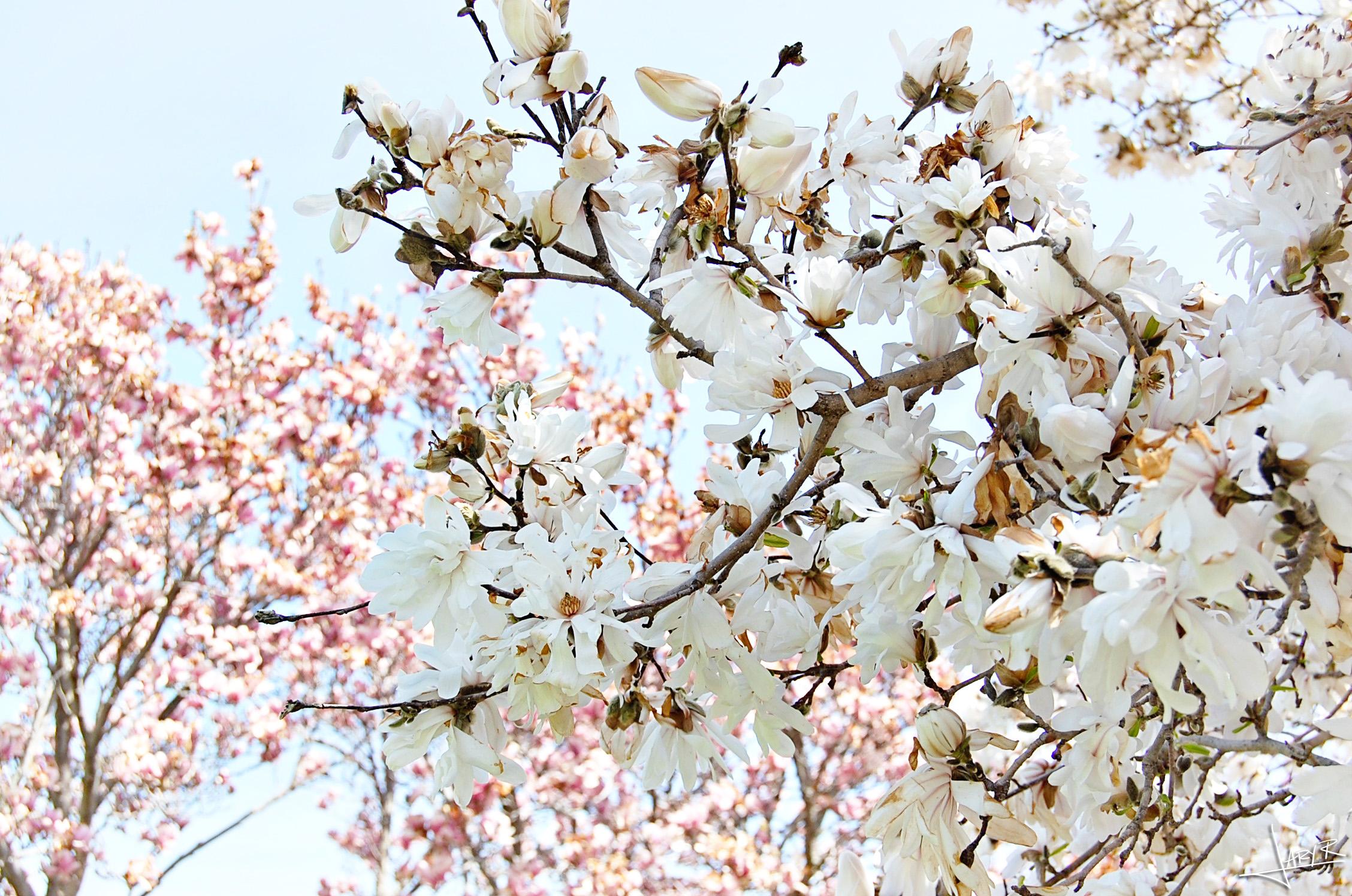 UWArboretum_Spring_3