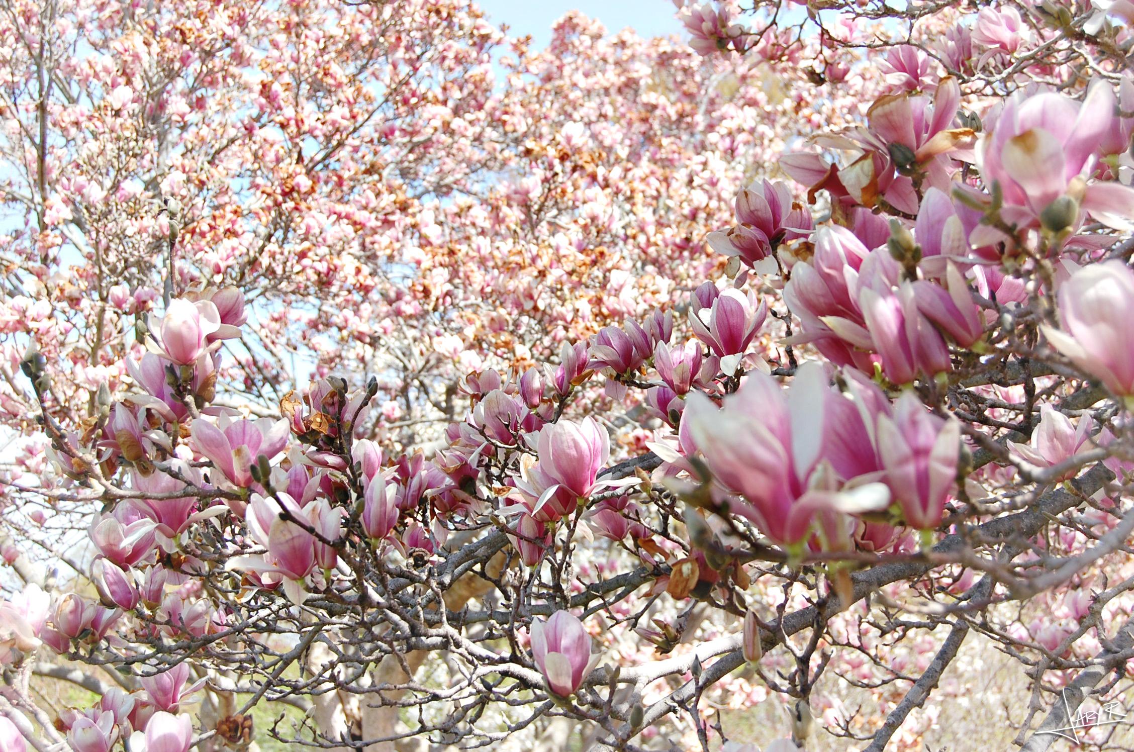 UWArboretum_Spring_4