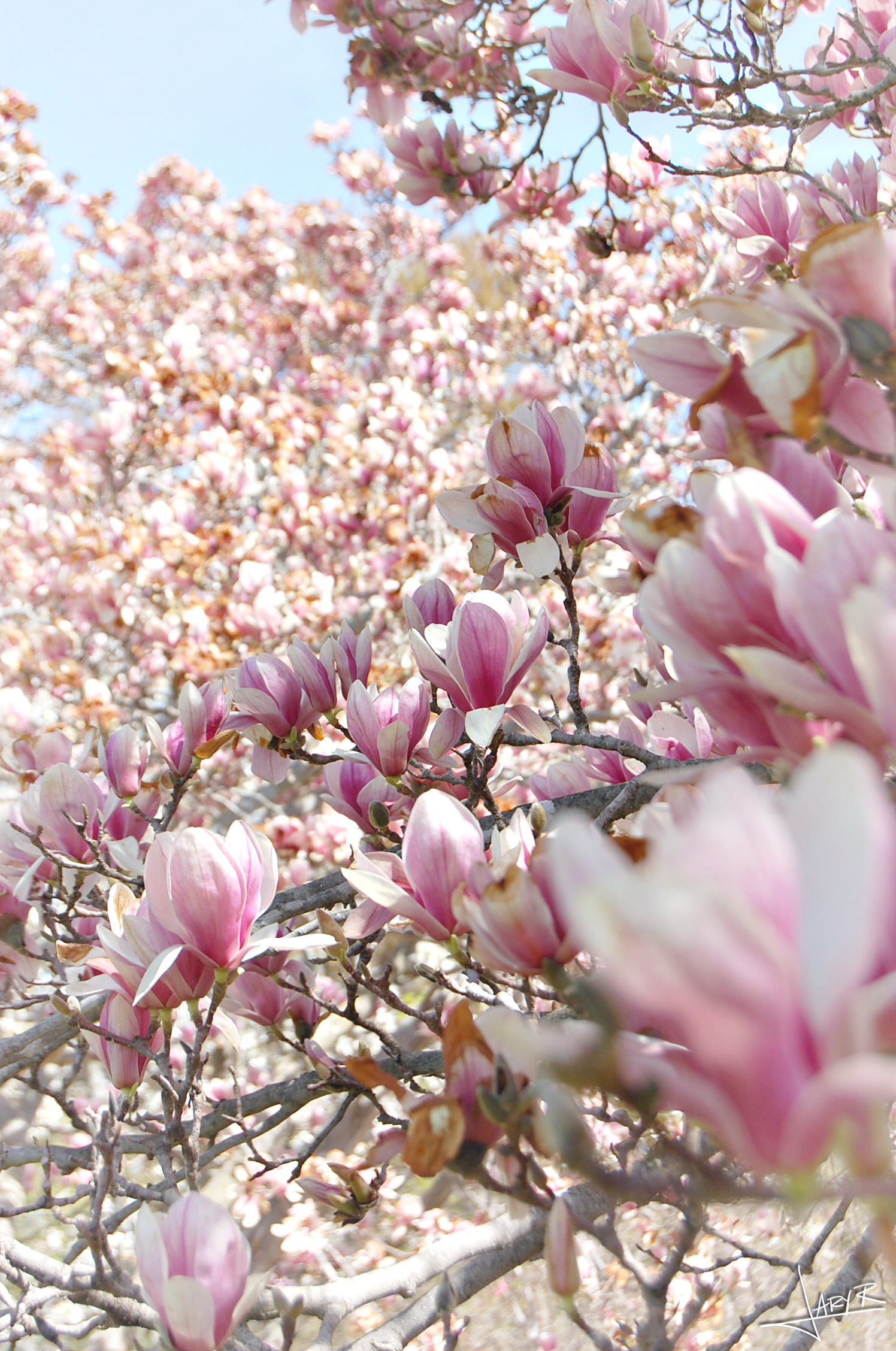 UWArboretum_Spring_5