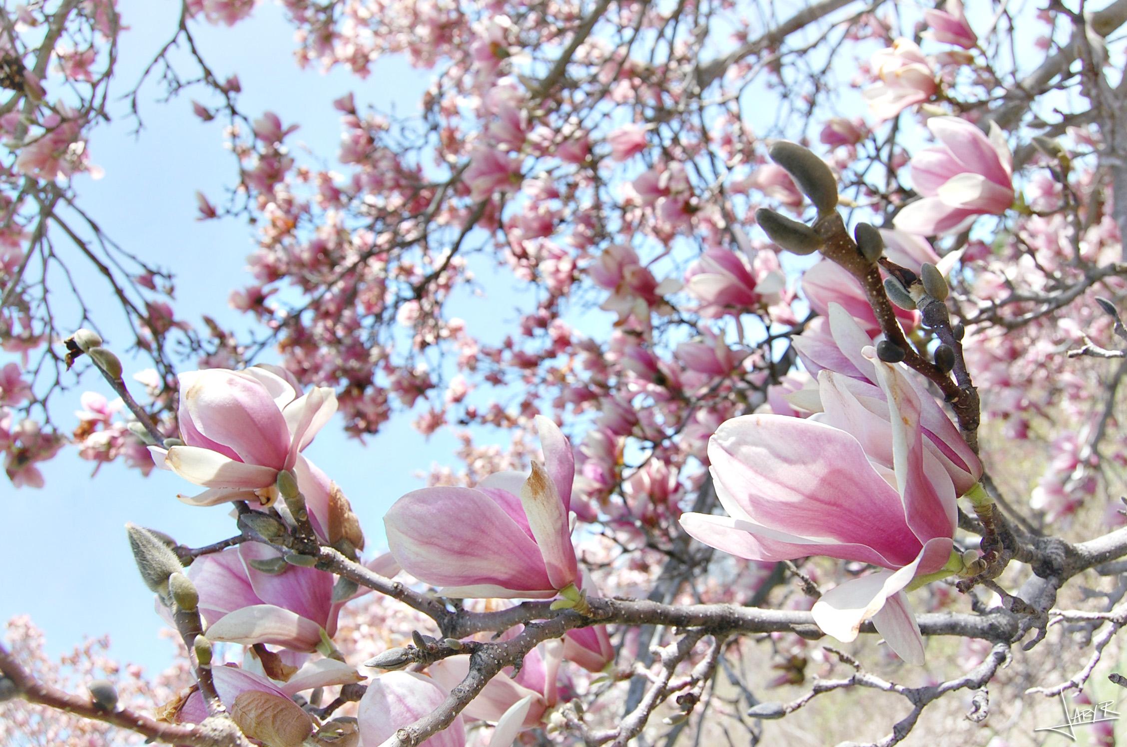 UWArboretum_Spring_6