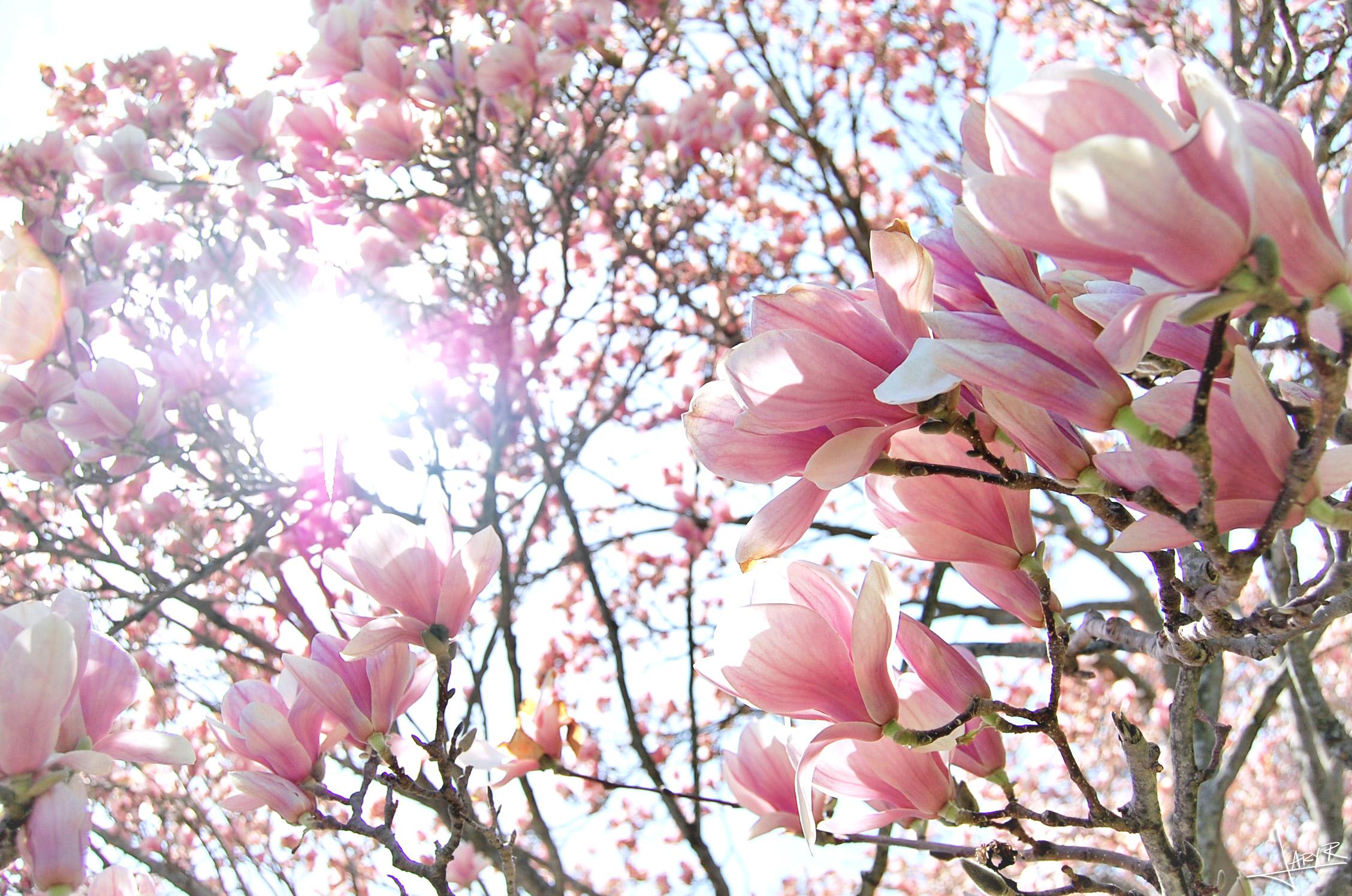 UWArboretum_Spring_7