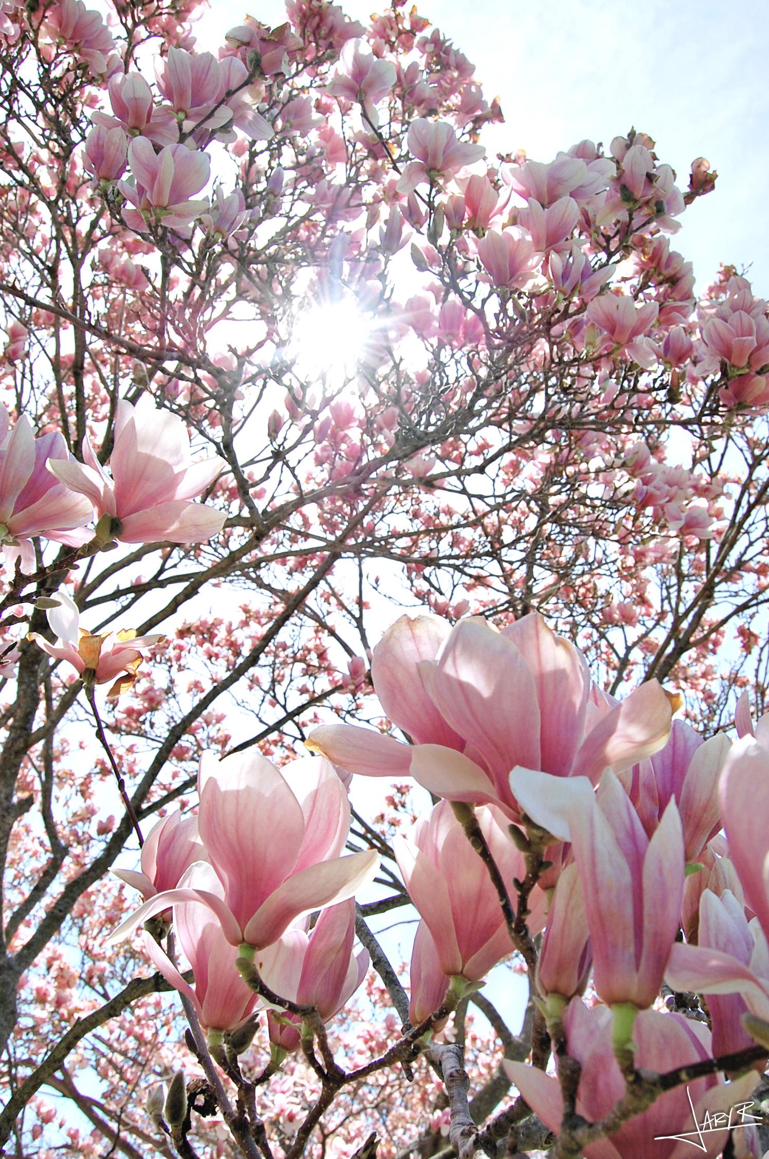 UWArboretum_Spring_8