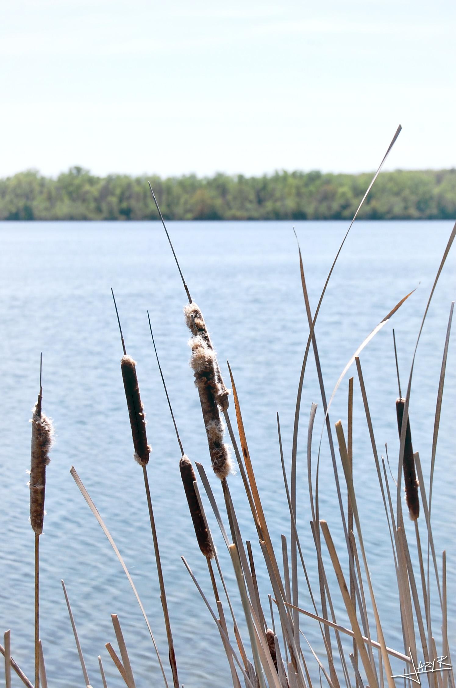 Lake Wingra Madison WI