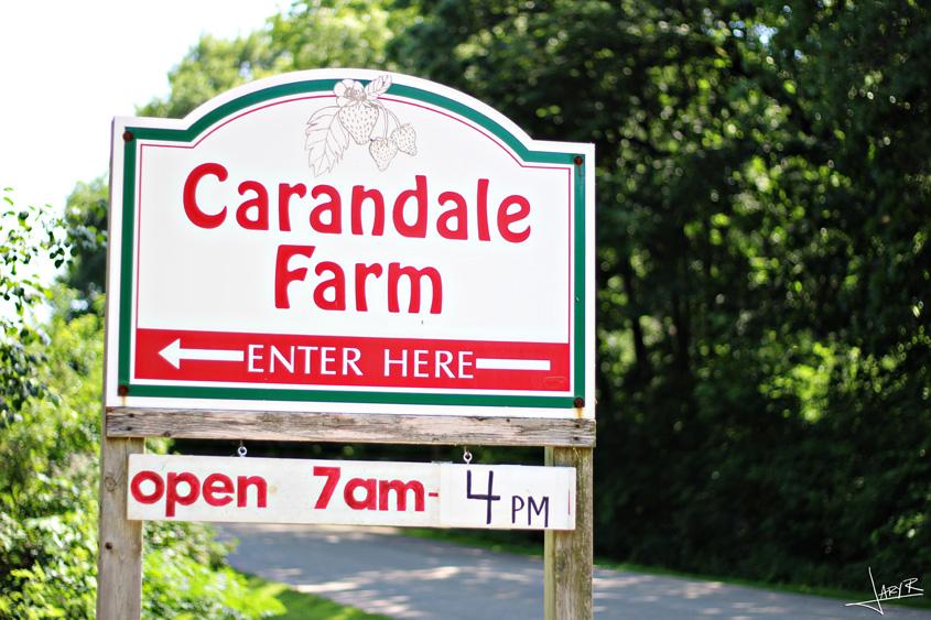 CarandaleFarm_9